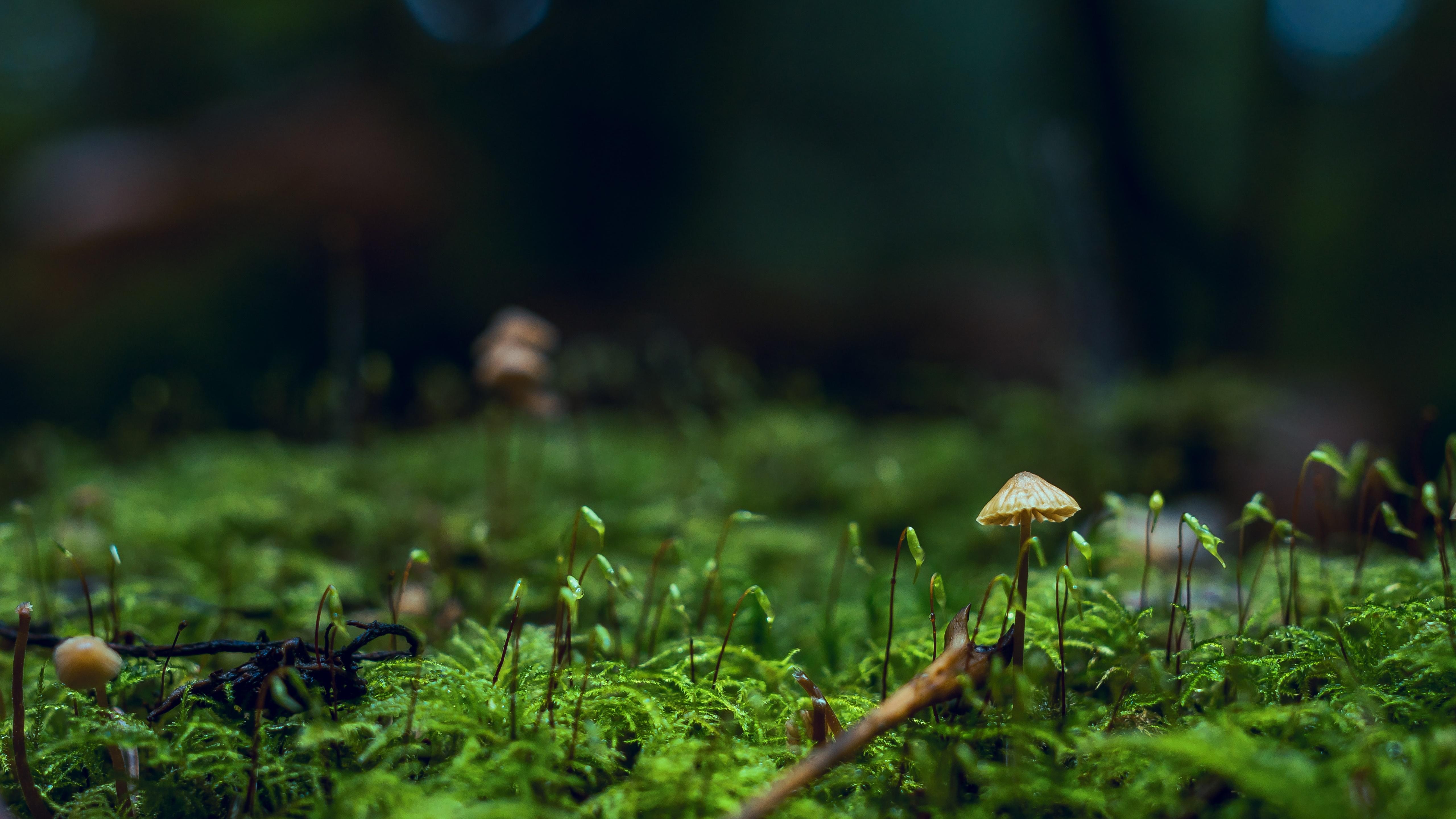 Moss macro photo wallpaper