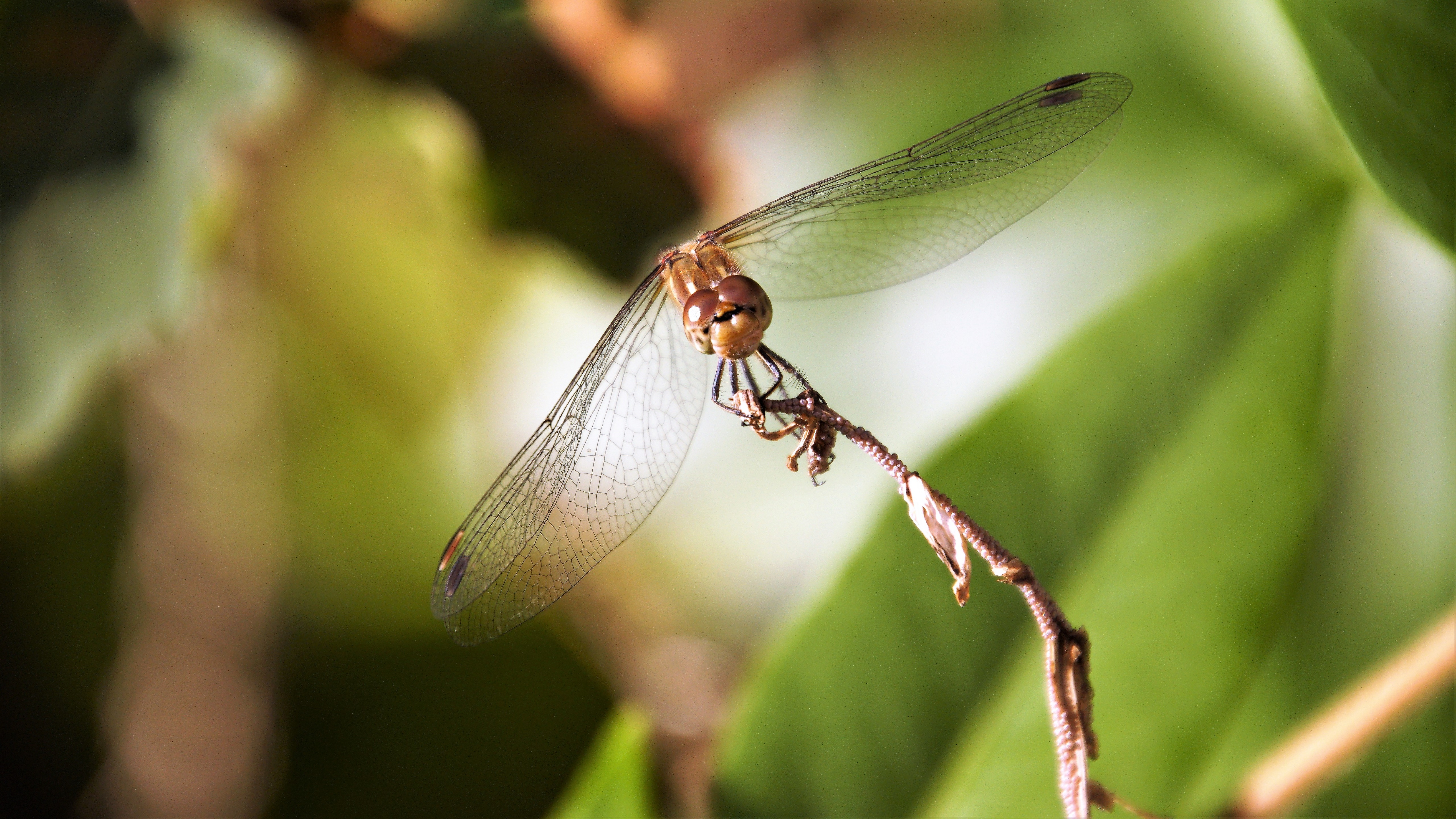 Dragonfly in the autumn wallpaper