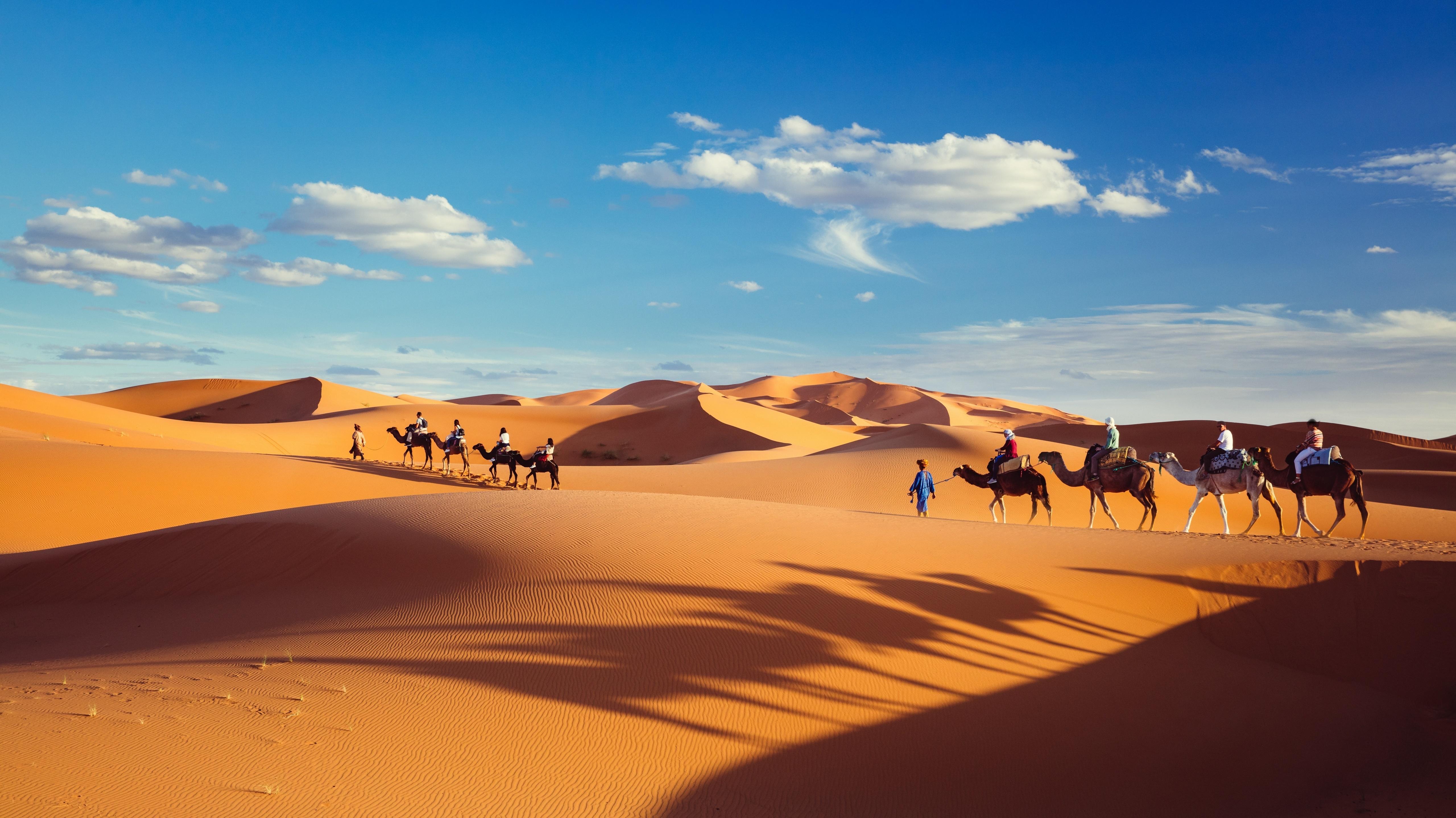 Camel caravan wallpaper