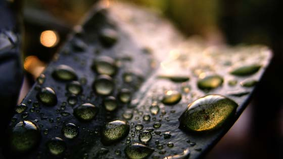 Wallpaper from nature category