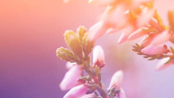Wallpaper from flowers category