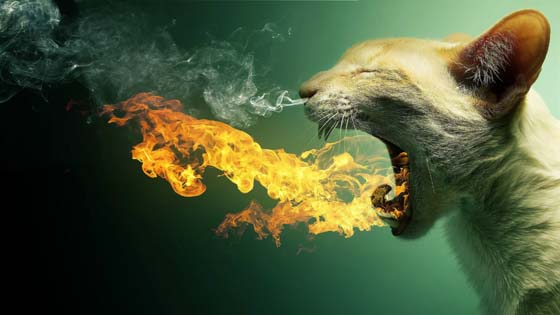 Fire-breathing cat wallpaper