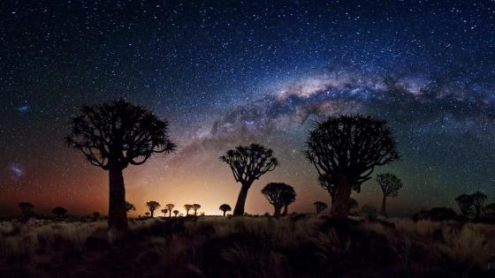 Milkyway over Baobab Trees wallpaper