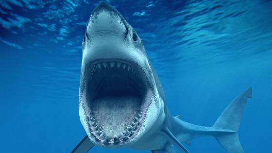 Underwater shark photography  wallpaper