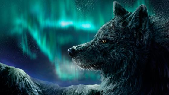 Wolf and polar lights wallpaper