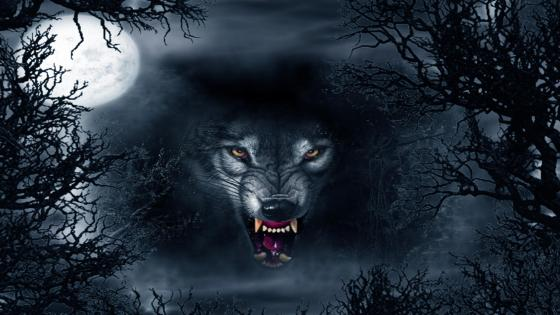 Snarling Wolf 4K UltraHD Wallpaper