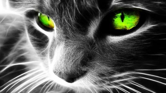 Gray cat with green eyes wallpaper