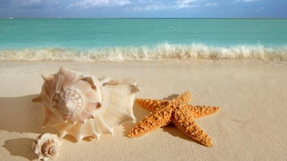 Snail shell and starfish on the sandy beach wallpaper