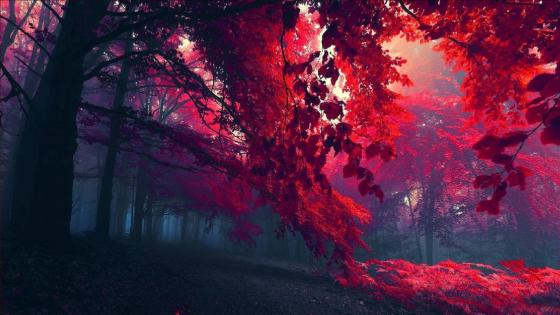 Red autumn forest wallpaper
