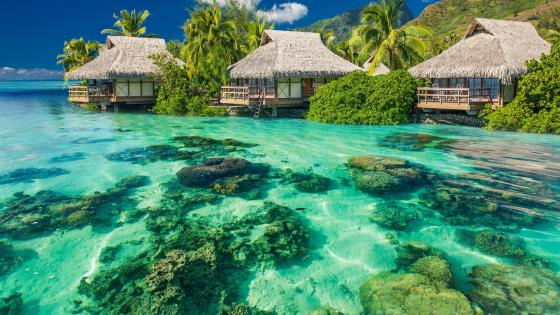Bungalows in the Bahamas wallpaper