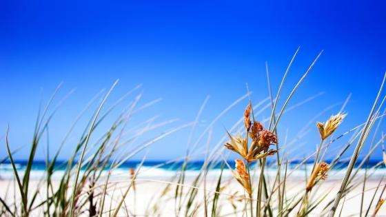 Blue sky in the summer beach ⛱ wallpaper