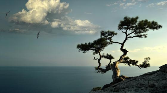 Lone tree on the rocky ridge wallpaper