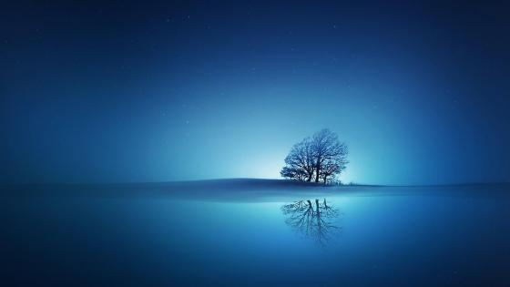 Lone tree reflected in the blue water wallpaper