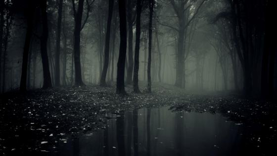 Scary misty forest wallpaper