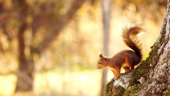 Cute squirrel  wallpaper