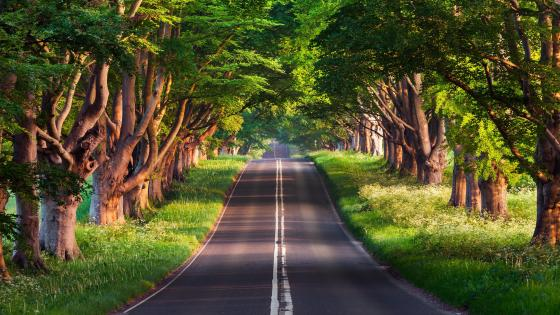 Tree alley wallpaper