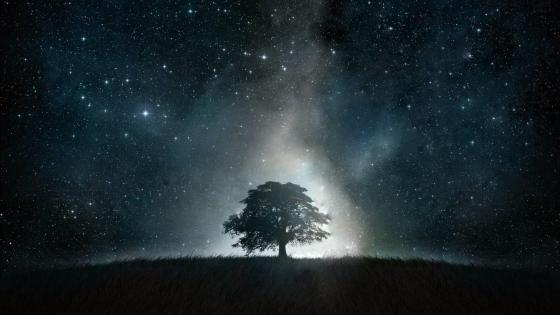 Lone tree under the starry night sky wallpaper