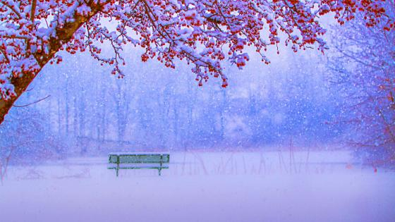 Bench in the winter park wallpaper