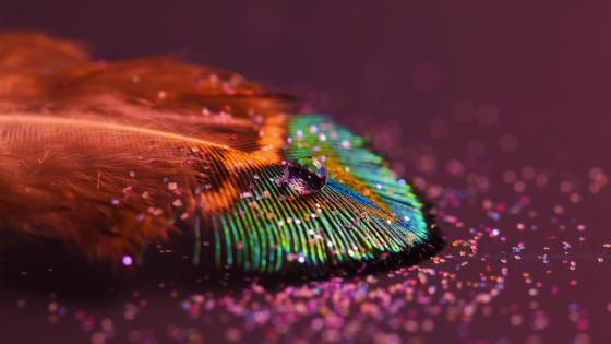 Drop on a feather - Macro photography wallpaper