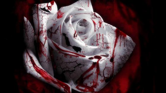 Bloody white rose wallpaper