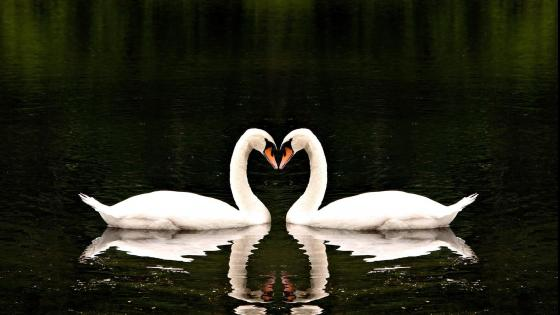 Wallpaper from animals category