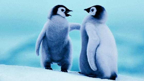 Cute baby Penguins wallpaper