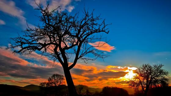 Bald tree at sunset wallpaper