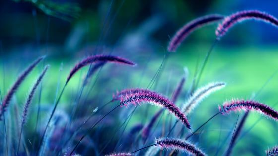 Purple grass wallpaper