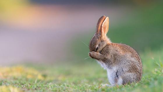 Cute rabbit in the grass field wallpaper