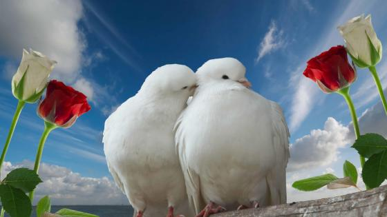 White dove couple wallpaper
