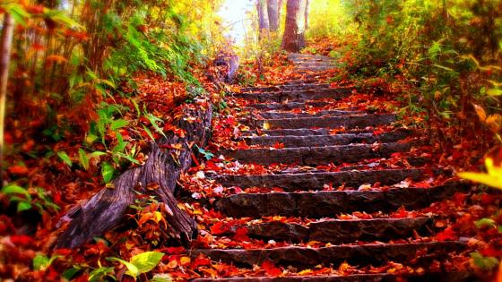 Red autummn leaves on the stairs    wallpaper