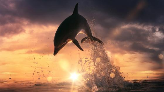 Dolphin jump out of the ocean wallpaper