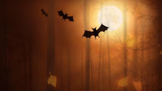 Halloween bats wallpaper