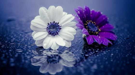 Raindrops and flowers wallpaper