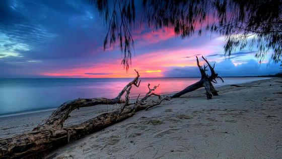 Beautiful sunset wallpaper