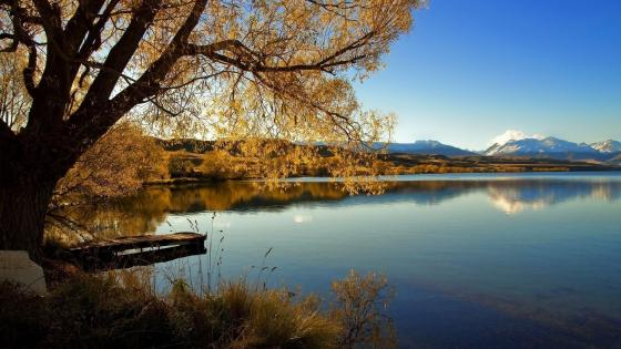 Lone Tree of Lake Alexandrina New Zealand wallpaper
