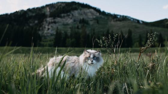 Cute cat in the field wallpaper