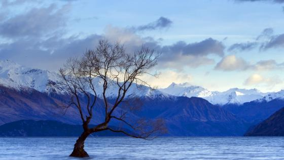 Lone tree landscape wallpaper