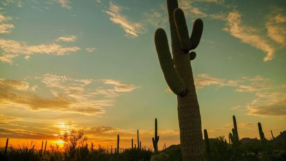 Wester cactus wallpaper