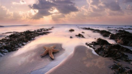 Seashore with starfish wallpaper