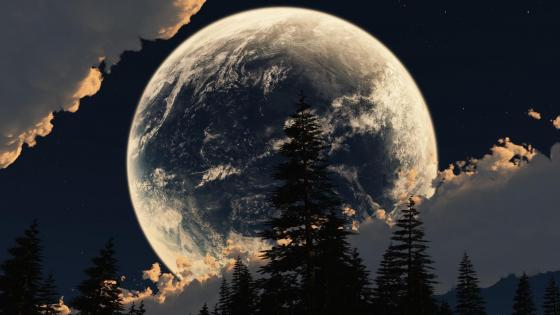 Full moon with pines silhouette wallpaper