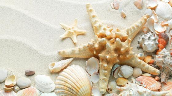 Starfish and seashells on sand wallpaper