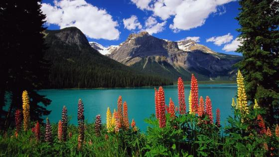 Flowery landscape from Emerald Lake wallpaper