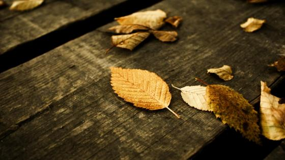 Autumn leaves on wood wallpaper