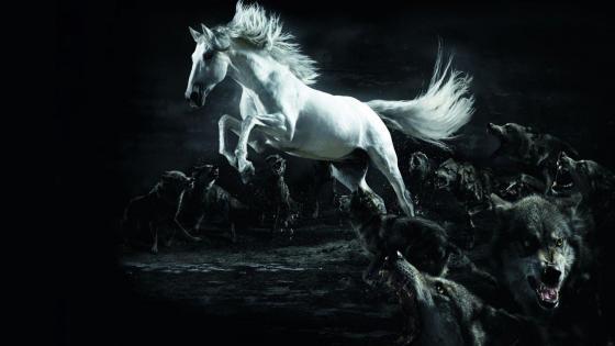 White horse among wolves wallpaper