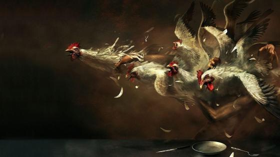 Crazy chickens wallpaper