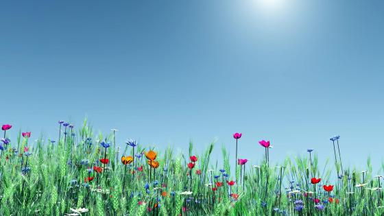 Wildflowers in the grass  wallpaper