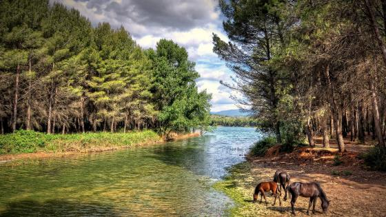 Horse family grazing along the river wallpaper