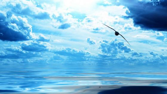 Blue sea with flying bird wallpaper