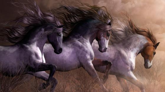 Galloping wild horses  wallpaper